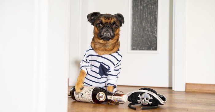 Pes Artur v námořnickém oblečku s lahví rumu